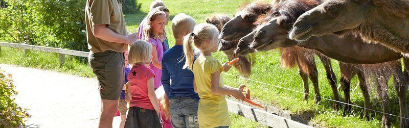 6_givskud_zoo_camel_feeding
